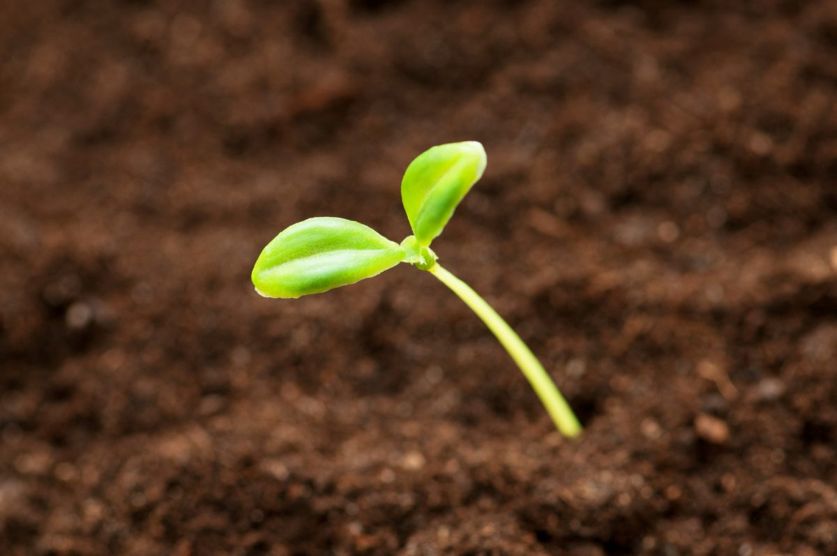 Plant the seeds of a Biblical Worldview and watch them grow